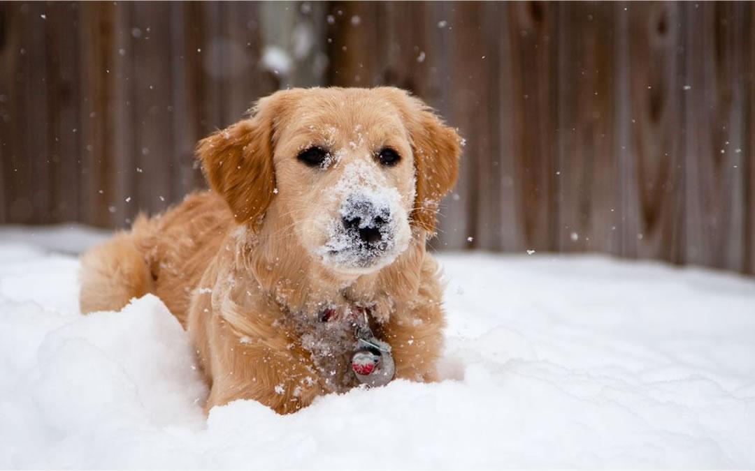 Come proteggere il cane dal freddo e dal gelo