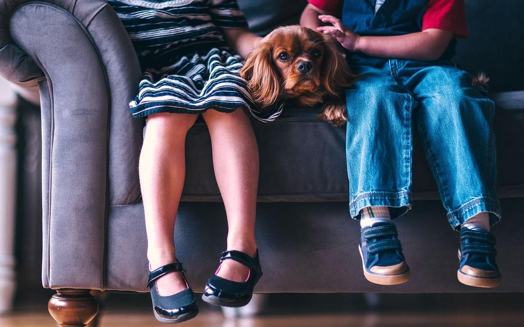 Come scegliere la razza di cane Dagel Mangimi