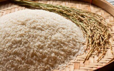 Benefici dei cereali nei mangimi per cani e gatti