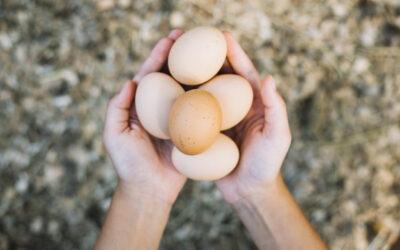 I cani possono mangiare le uova?
