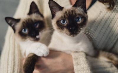 La Taurina per i gatti